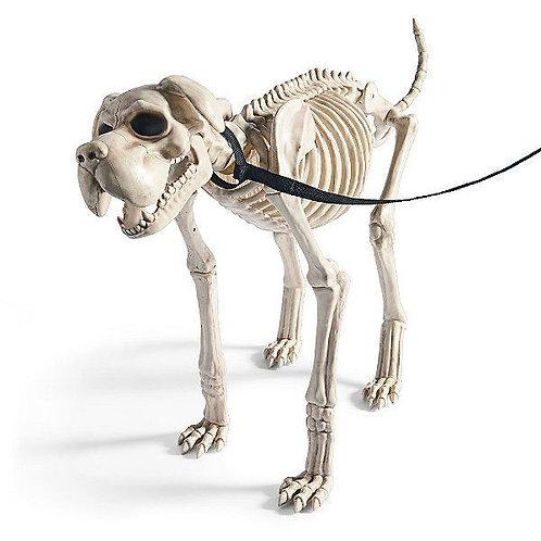 Big Skeleton Dog Rental