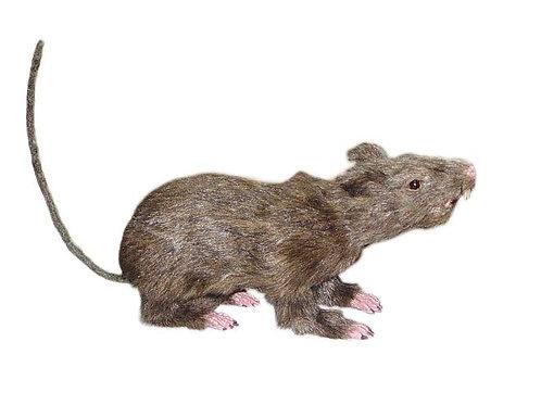 Rat Rental