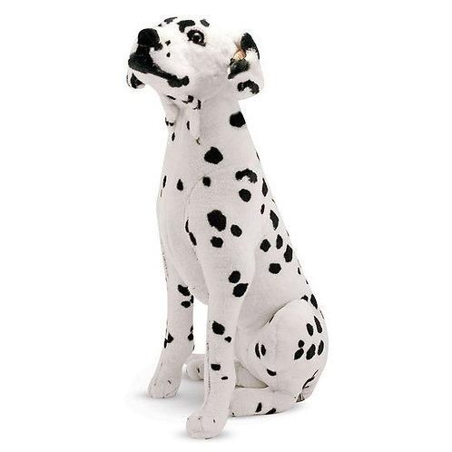 Dalmatian Rental