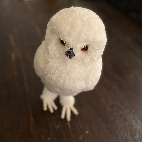 Arctic Owl Rental