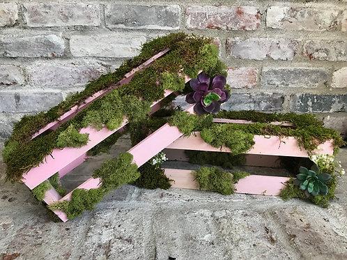 Pink Moss Risers Rental