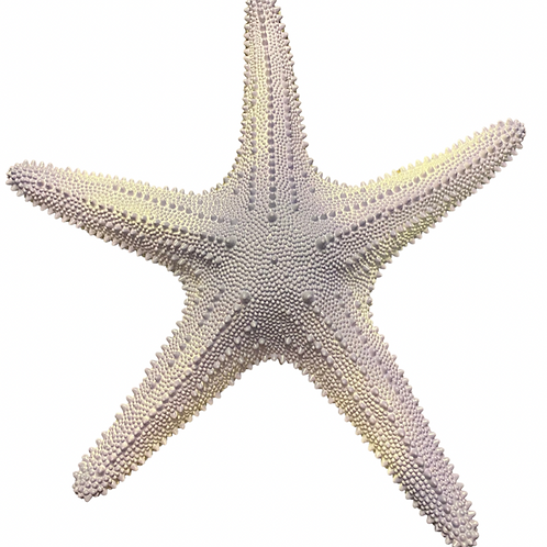 Giant Lavender Starfish Rental