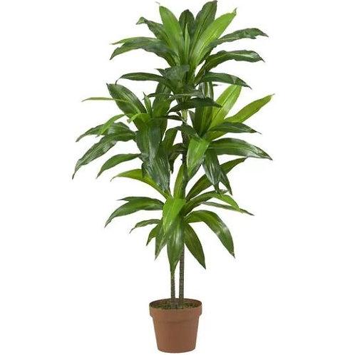 Dracenea Imitation Plant Rental
