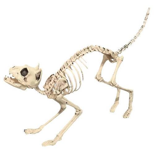 Cat Skeleton Rental