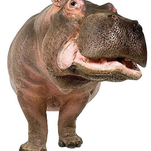 Hippopotamus Cutout Standup Rental