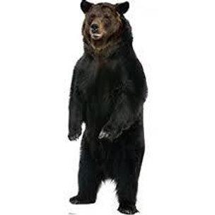 Brown Bear Cardboard Standup Rental