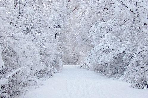 Snow Road Backdrop Rental