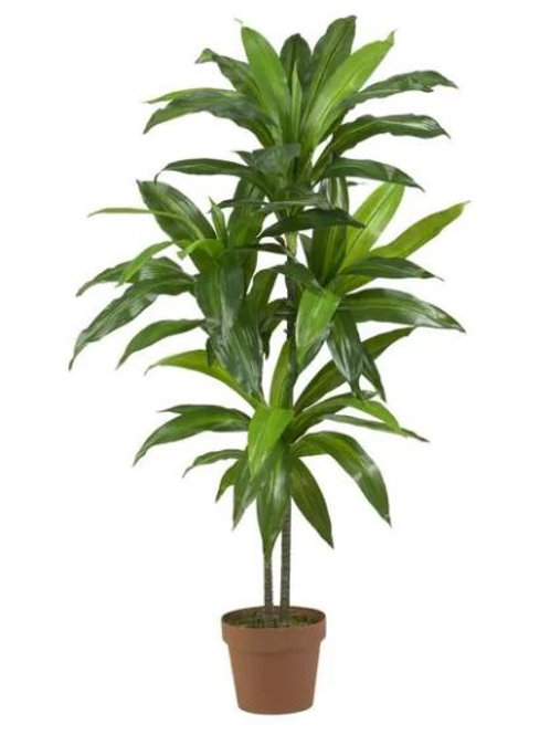 Dracaena Real Touch Artificial Plant Rental