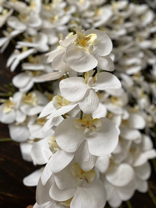 Set of White Orchids Rental