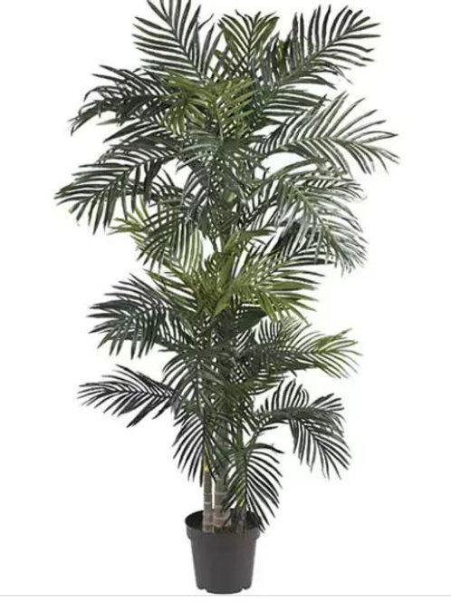 Golden Cane Palm Tree Rental