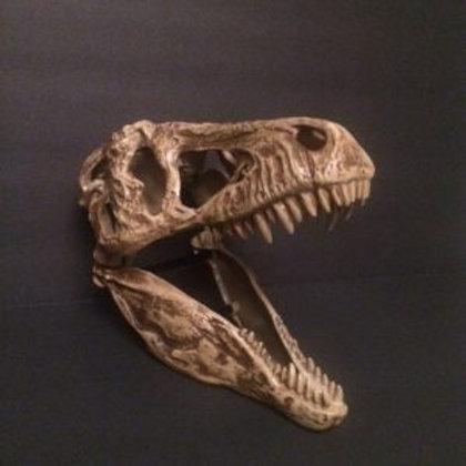 Dinosaur – Dino Skull Rental