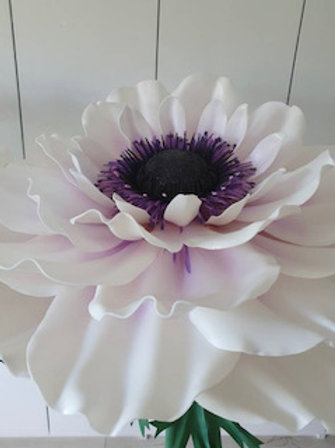 White Giant Anemone Rental