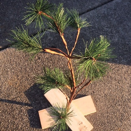 Small Pine Tree Rental