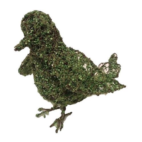Green Moss Bird Rental