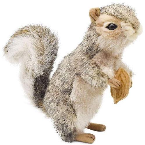 Gray Squirrel Plush Rental