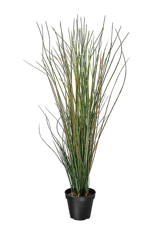 Potted Grass Rental