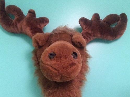 Moose Head Rental