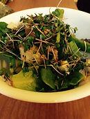 red russian kale microgreens