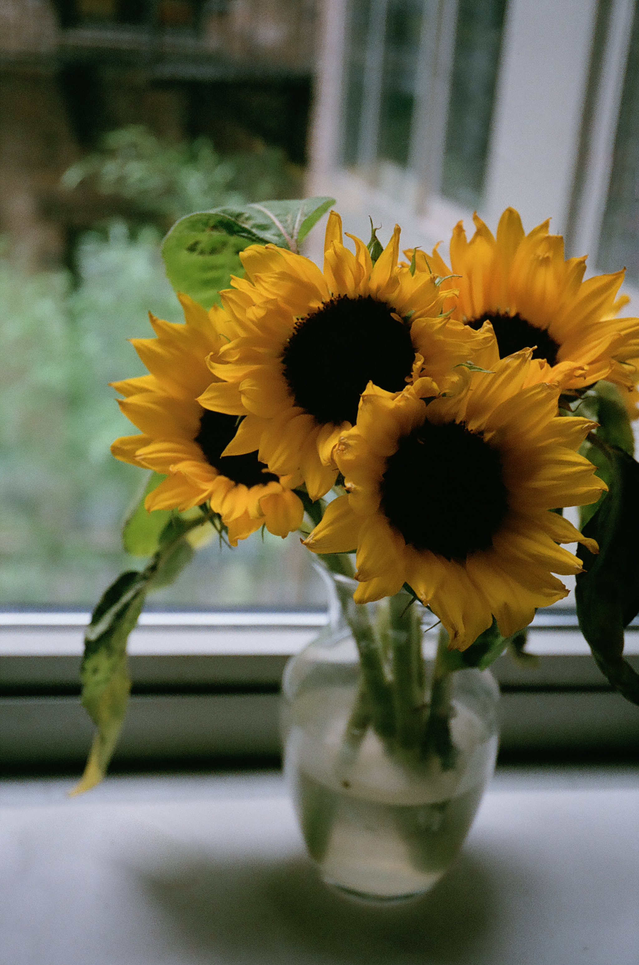 My favorite flowers, sunflowers