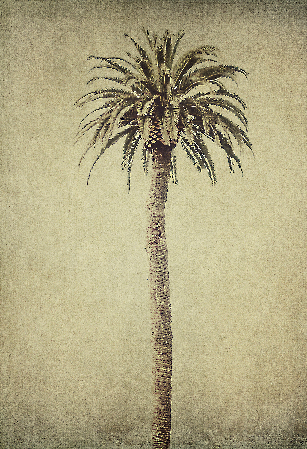 Tall Lonely Palm