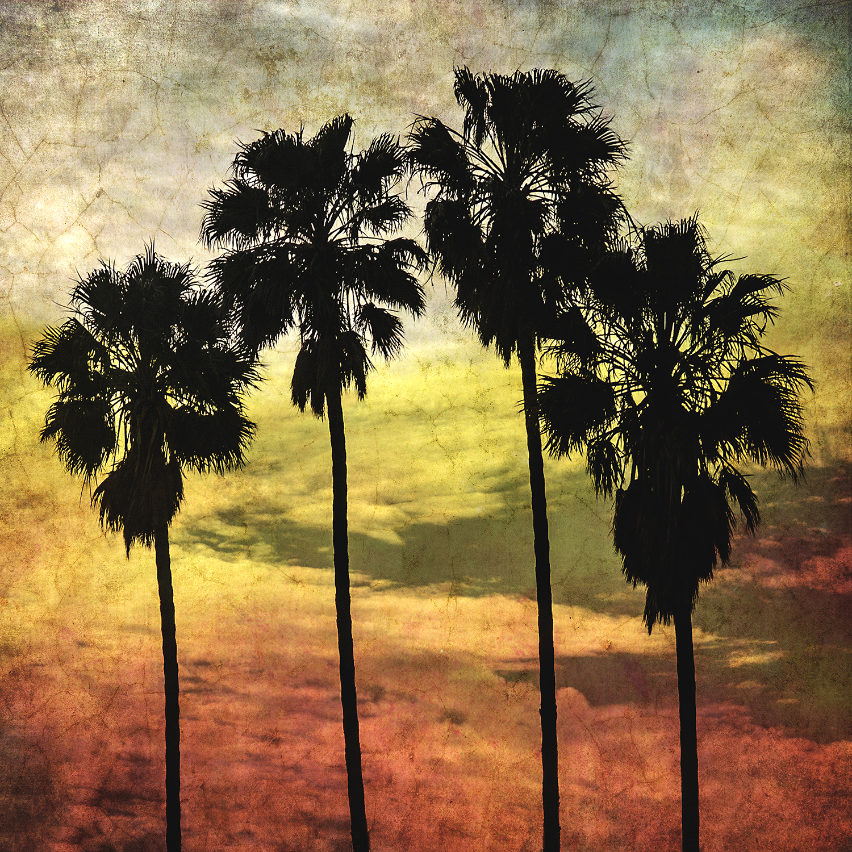 Four Palms Part II
