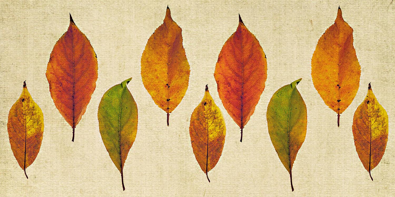 Tropical Leaf Collage