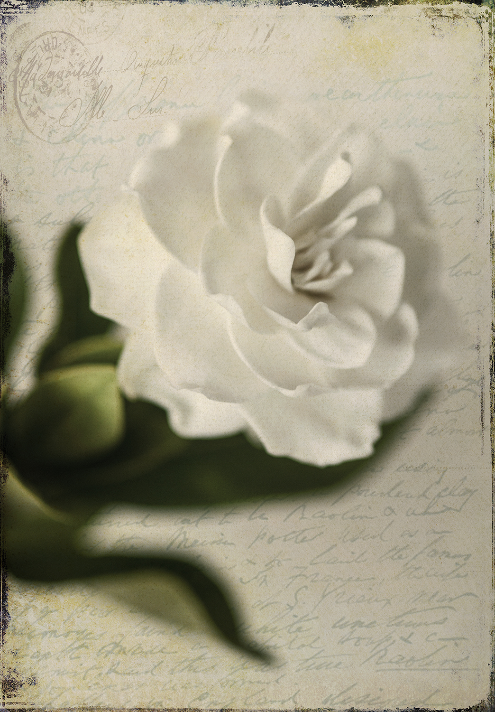 Gardenia Grunge 2