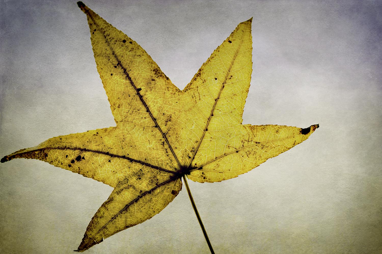 Yellow Leaf Panel 1