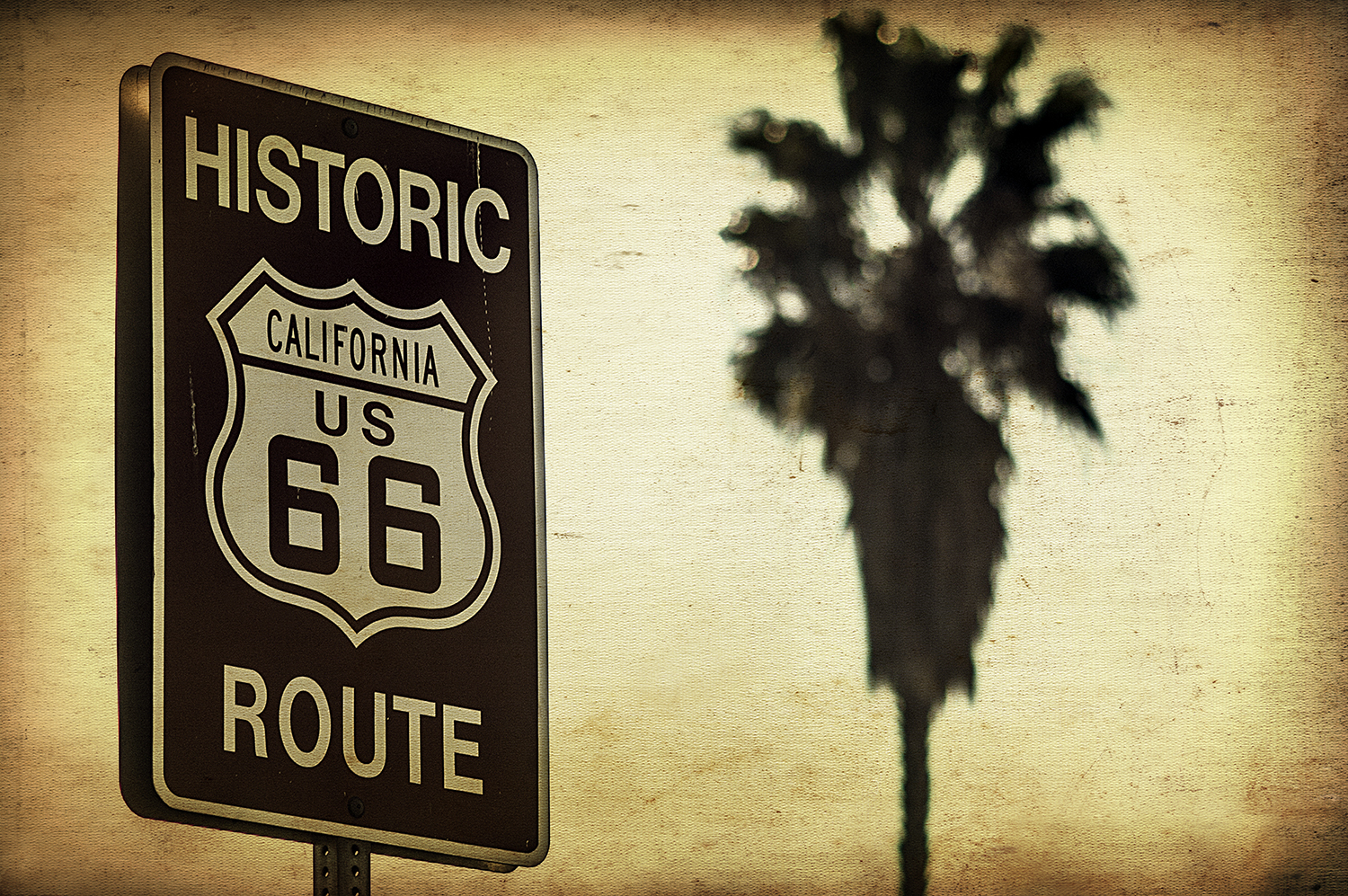 Route 66 Palm Tree