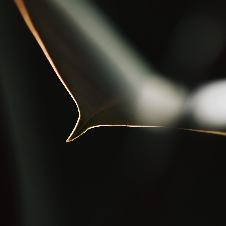 Rim Light on Leaf