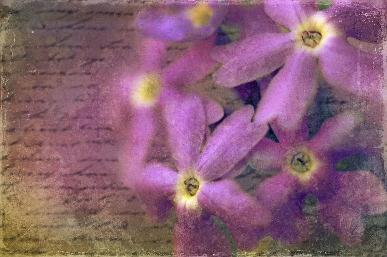 Purple Flower Scroll