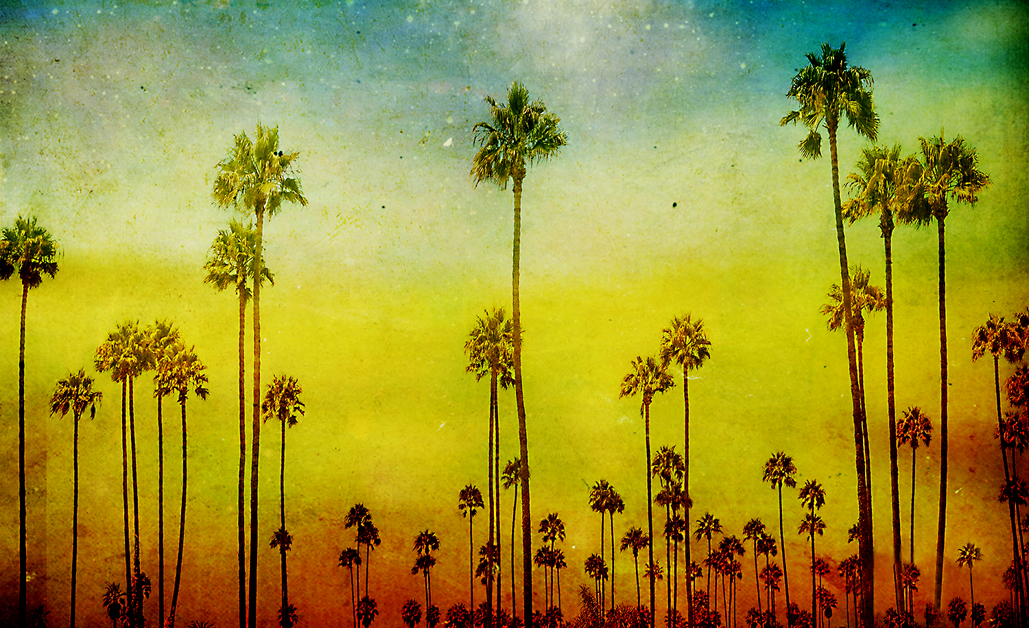 Valley Of Palms