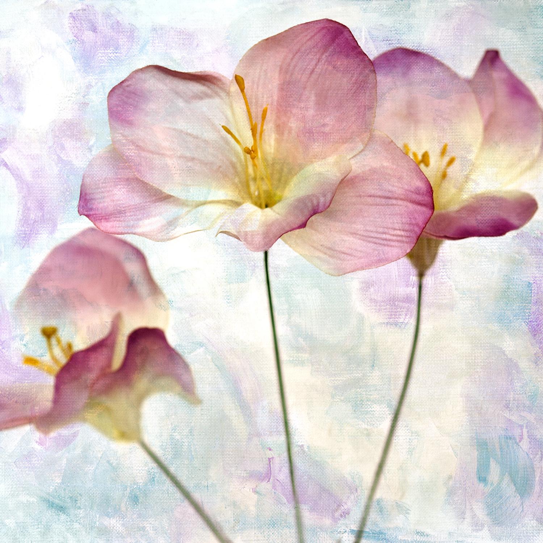 Pink Hyacinth Panel 2
