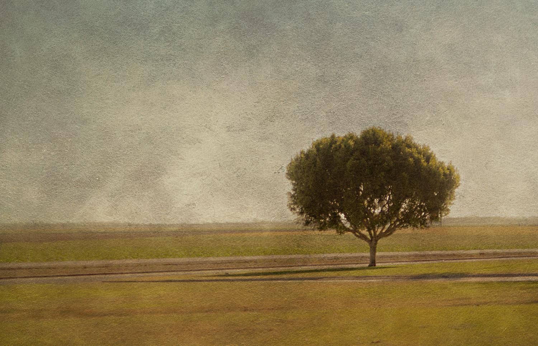 Lone Tree Minimal