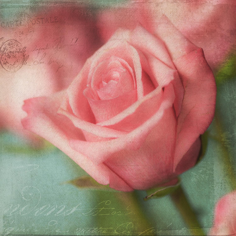 Rose Bud Pink 2
