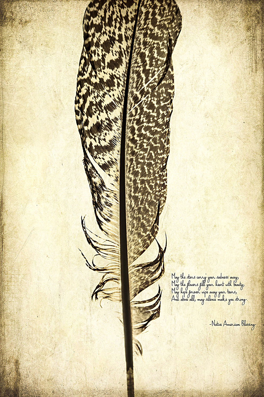 Macro Turkey Feather