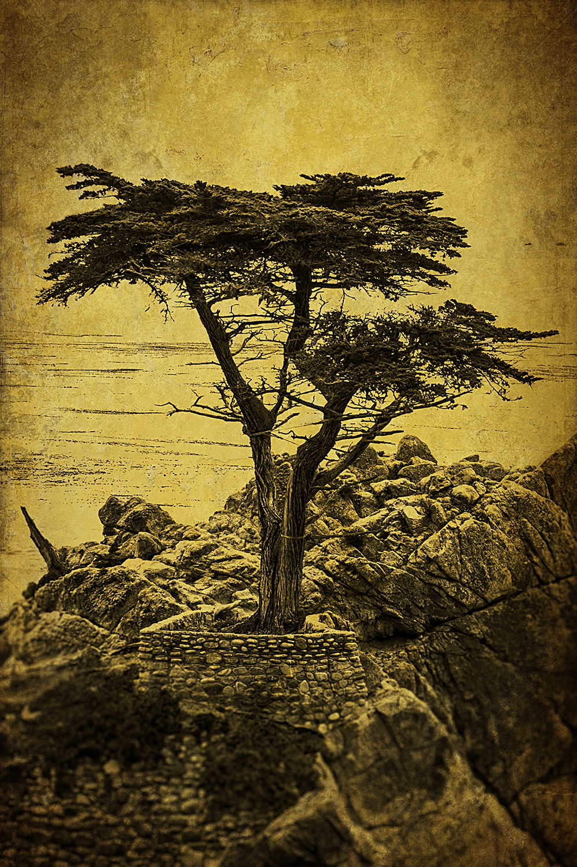 Carmel Yellow Toned Cypress