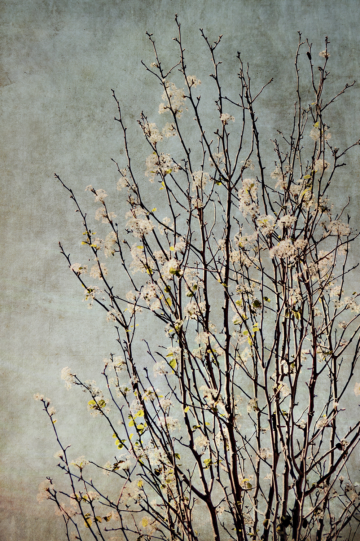 Vert. White Tree