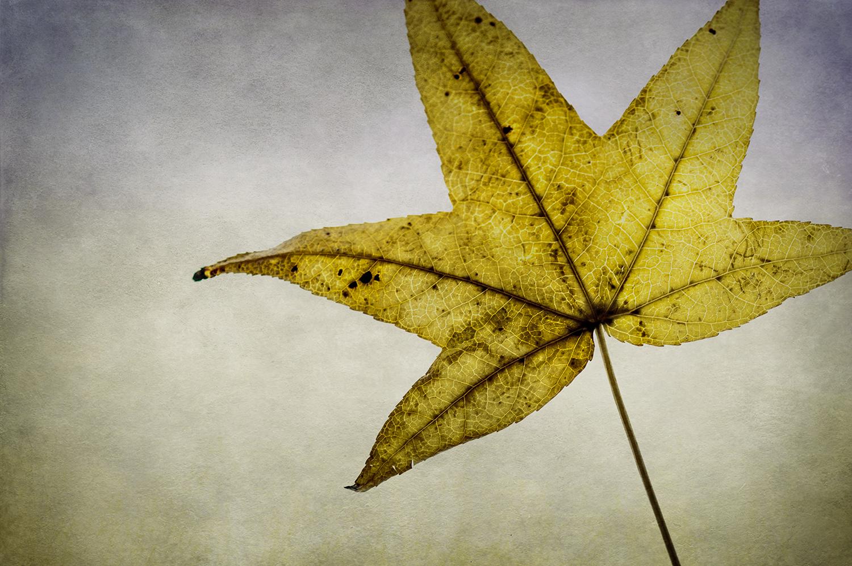 Yellow Leaf Panel 2