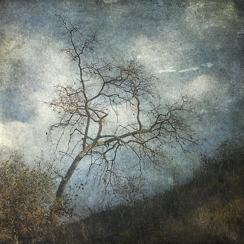 Swaying Tree