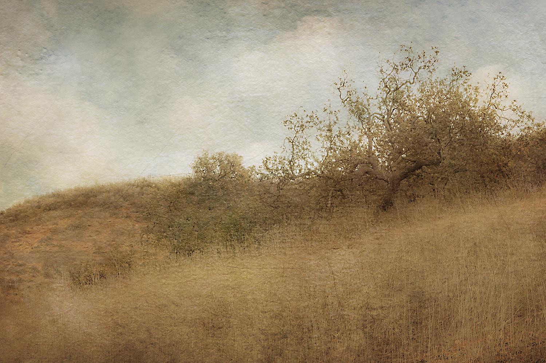 Oak Against The Sky