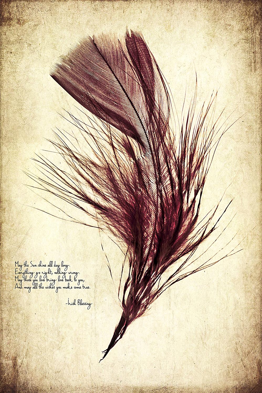 Burgundy Feather