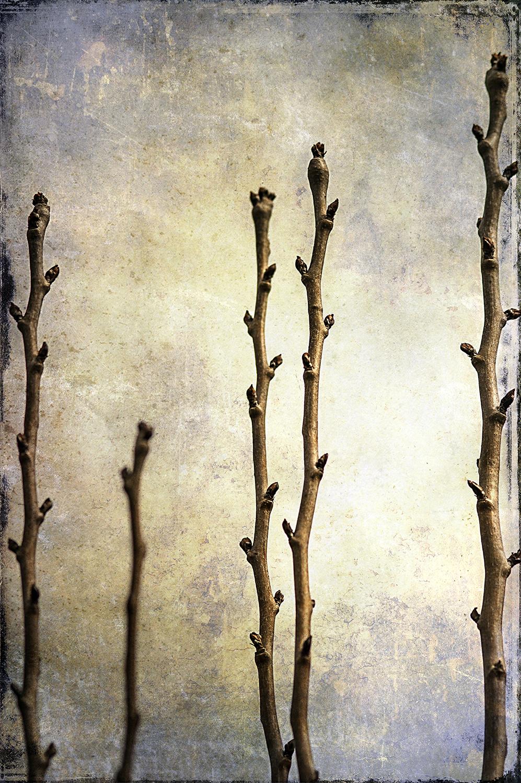 Pear Tree Panel 1