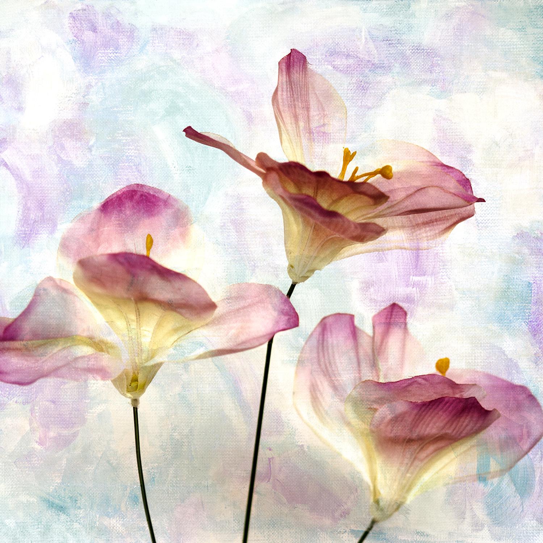 Pink Hyacinth Panel 1