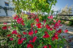 Flores Exterior
