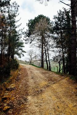 Jakobsweg - Camino del Norte (4)