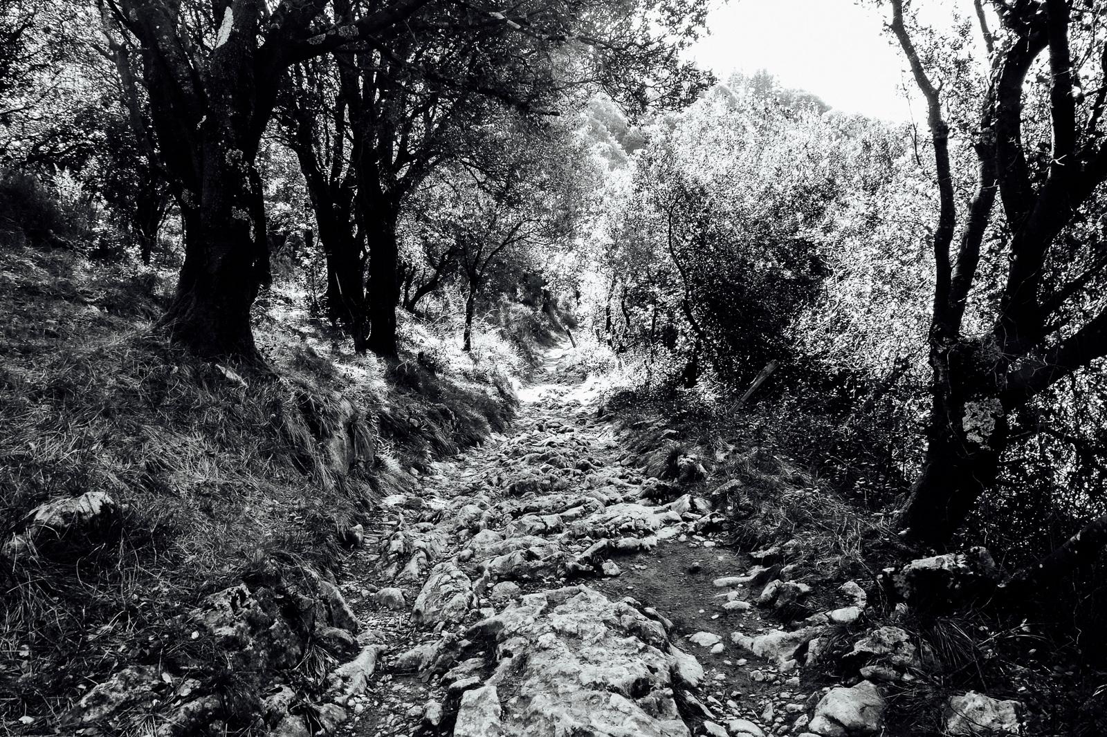Jakobsweg - Camino del Norte (85)