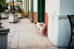 Kuba_(Fotos_by_Rene_Stryja_-_Fotograf_aus_Tübingen)_(260)