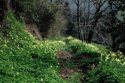 Jakobsweg - Camino del Norte (205)