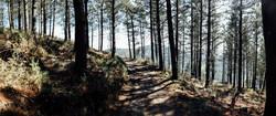 Jakobsweg - Camino del Norte (92)